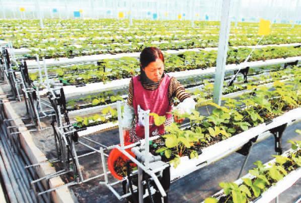 创投市场探访滕州丰谷云农生态草莓如何成为智慧农业的风向标呢?